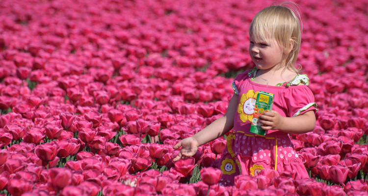 Pink Olanda