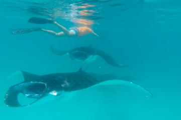 Snorkeling con le mante, Maldive, baia di Hanifaru