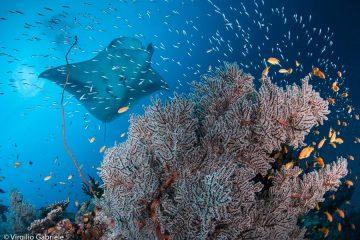 Immersioni Maldive Dharavandhoo