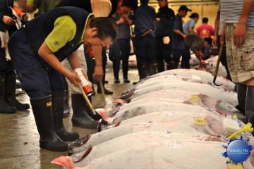 Giappone, tsukiji market, asta dei tonni