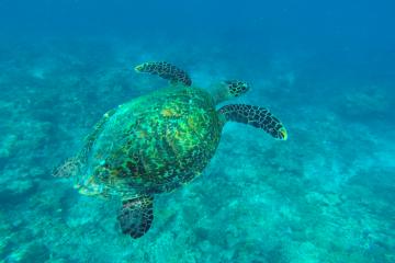 Snorkeling Maldive Alternative