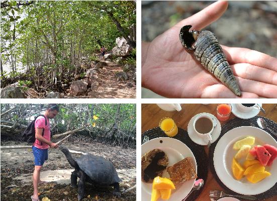 Isole Seychelles, Curieuse e St. PIerre, tartarughe, alghe