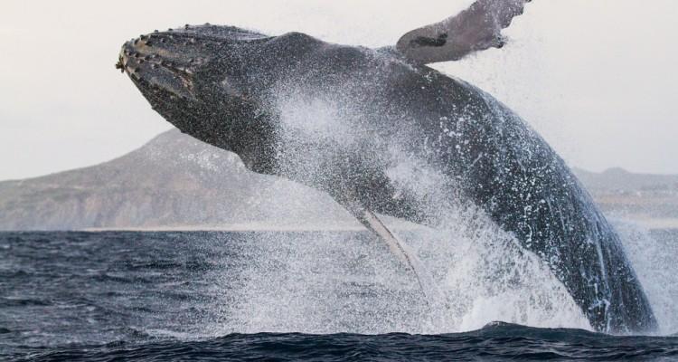 vedere la balene